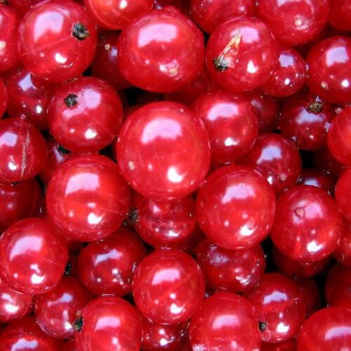 4#:Czerwona porzeczka-młody-wygląd..jpg