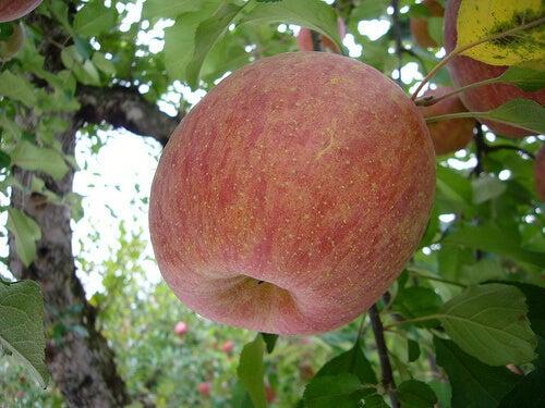 2#:środki-oczyszczające-jabłko.jpg