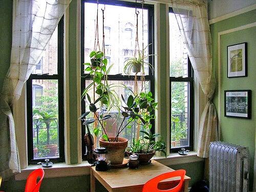 Rośliny przy oknie