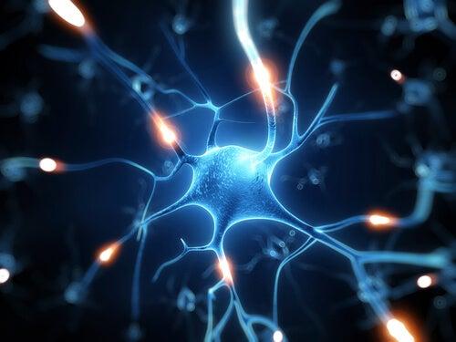 !#:resweratrol-idealna-ochrona-mozgu.jpg
