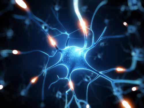 Resweratrol. Idealna ochrona mózgu