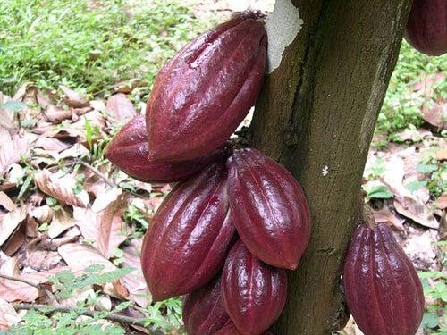 2#kakao-czekolada.jpg