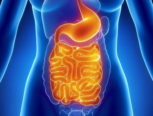 układ trawienny a cukrzyca