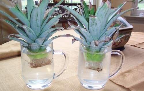 ananas w wodzie