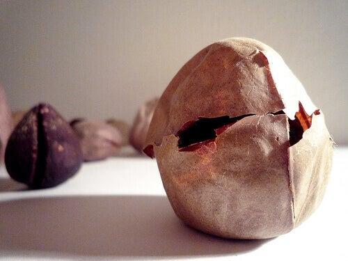 2#:nasiona-awokado.jpg