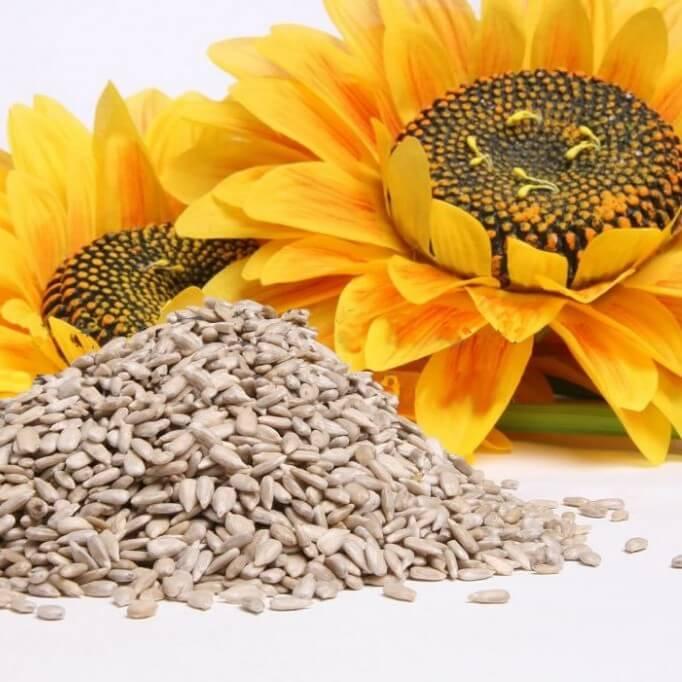 Kwiat i nasiona słonecznika