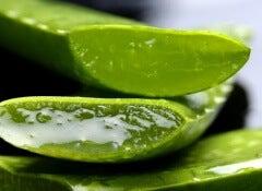 1#:Rośliny lecznicze - jak je uprawiać.jpg