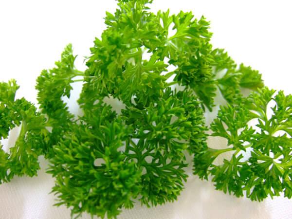 5#:Pietruszka-rośliny lecznicze.jpg