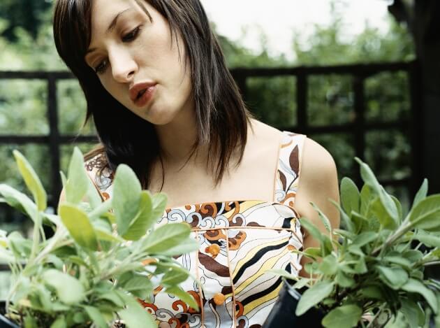 4#:Szałwia-rośliny lecznicze.jpg