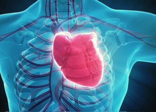 serce człowieka - miód zadba o jego zdrowie