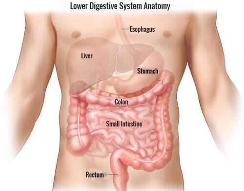 Na czym polega choroba Crohna?