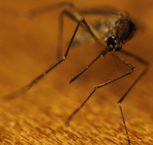 2#:komary.jpg