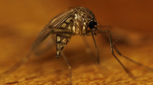 4#:komary.jpg