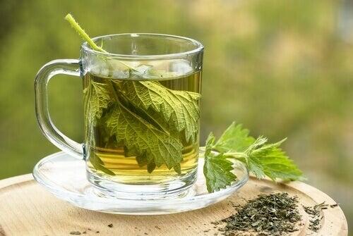 Napar z pokrzywy na ziołowe oczyszczanie krwi