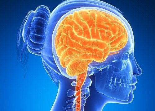 Zwiększ aktywność mózgu tymi produktami!