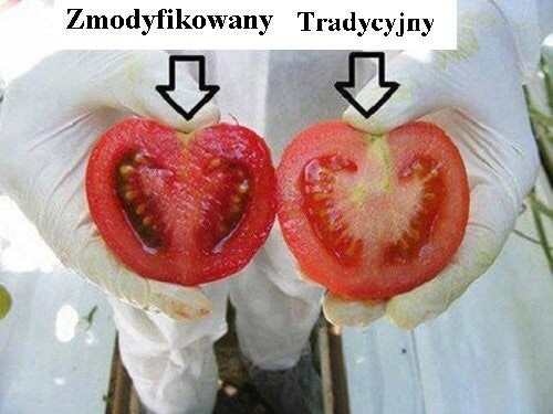 Żywność transgeniczna — co o niej wiesz?