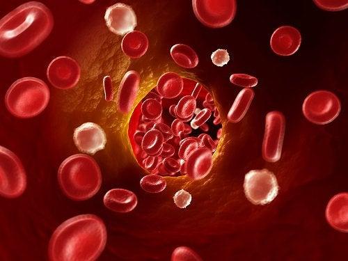Czerwone krwinki wenątrz żyły