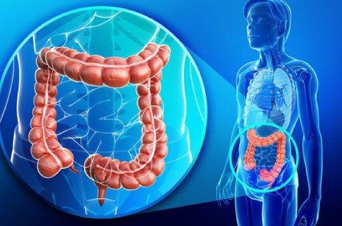 Nadwaga a jelito grube – Jaki związek?