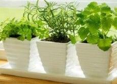 Rośliny przyciągają pozytywna energię