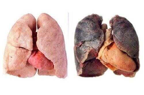 Co zrobić, aby oczyścić swoje płuca?