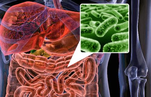 Odnawiamy florę bakteryjną jelit – 5 produktów