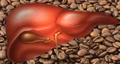 Wpływ kawy na pracę wątroby