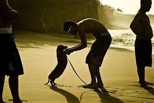 Taniec z psem na plaży