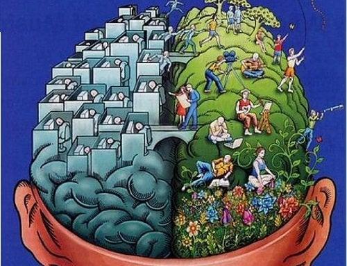 Półkule mózgowe a nasze umiejętności