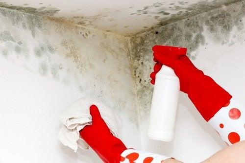 Usuwanie pleśni ze ściany