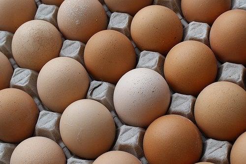Jajka skorupki