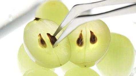 Pestki winogron