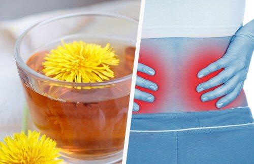 Oczyszczamy nerki — kilka prostych sposobów