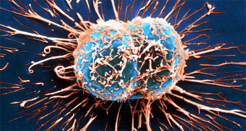 Komórki raka