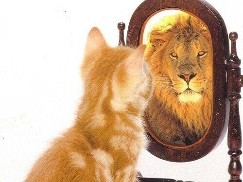 Kot spoglądający w lustro