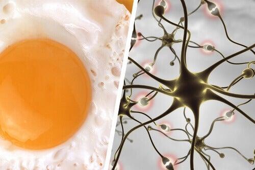 Poprawa pamięci dzięki jajkom