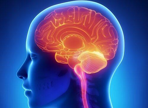 Sprawny mózg