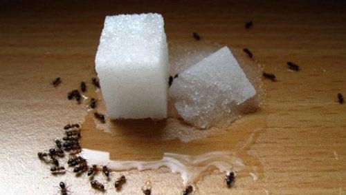 Mrówki w kuchni