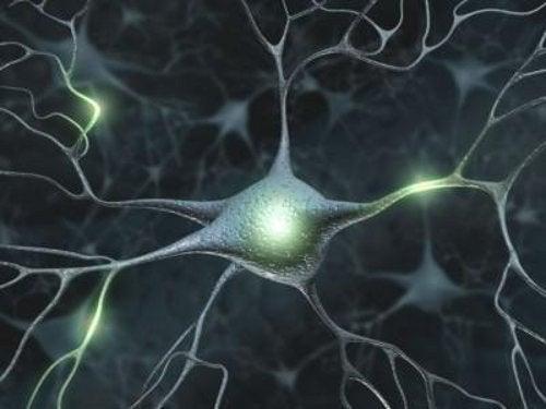 Komórki nerwowe