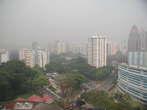 Metale ciężkie w miastach