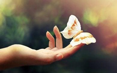 Motylek na dłoni