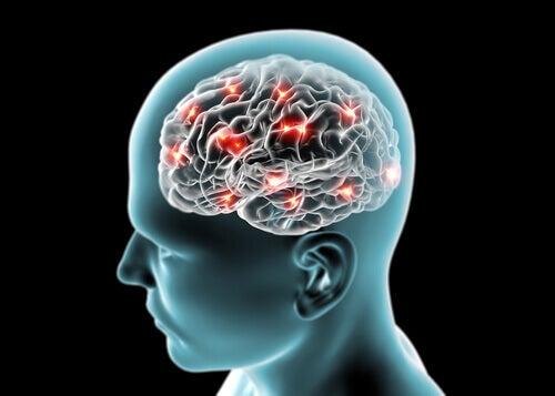 Mózg, połączenia nerwowe