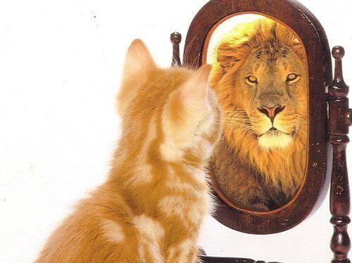 Odbicie lwa w lustrze