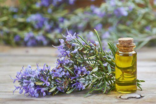 olejek rozmarynowy do włosów