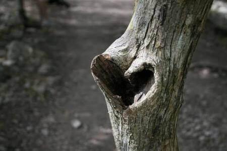 Dziura w kształcie serca w drzewie