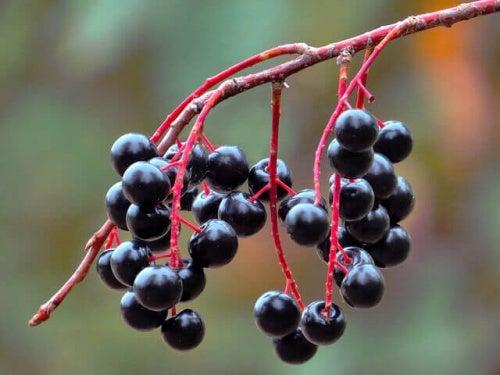 Owoce bzu