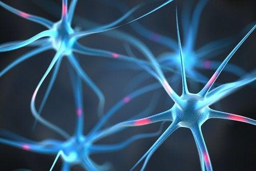 Mózg i neurony