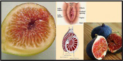 Figi wagina