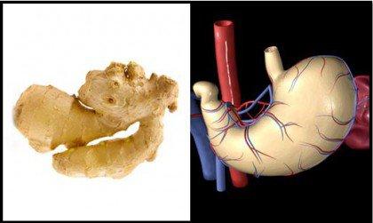 Imbir żołądek