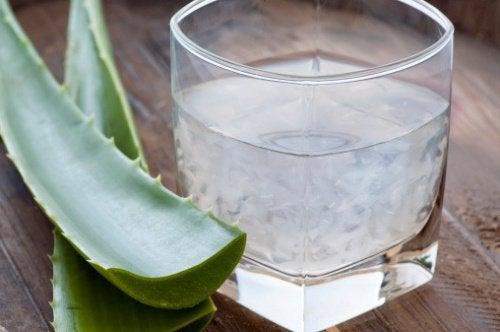 Aloes i szklanka wody