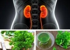 Napary ziołowe na nerki